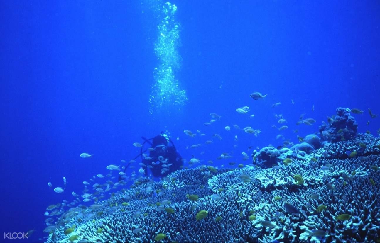 夏威夷浮潜,夏威夷夜间浮潜,夏威夷魔鬼鱼,夏威夷大岛魔鬼鱼,夏威夷大岛夜潜,夏威夷大岛潜水