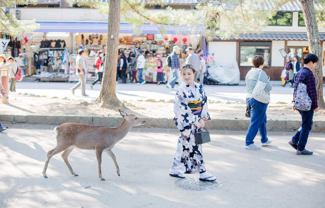 奈良和服體驗,奈良餵鹿,奈良和服觀光,奈良一日遊
