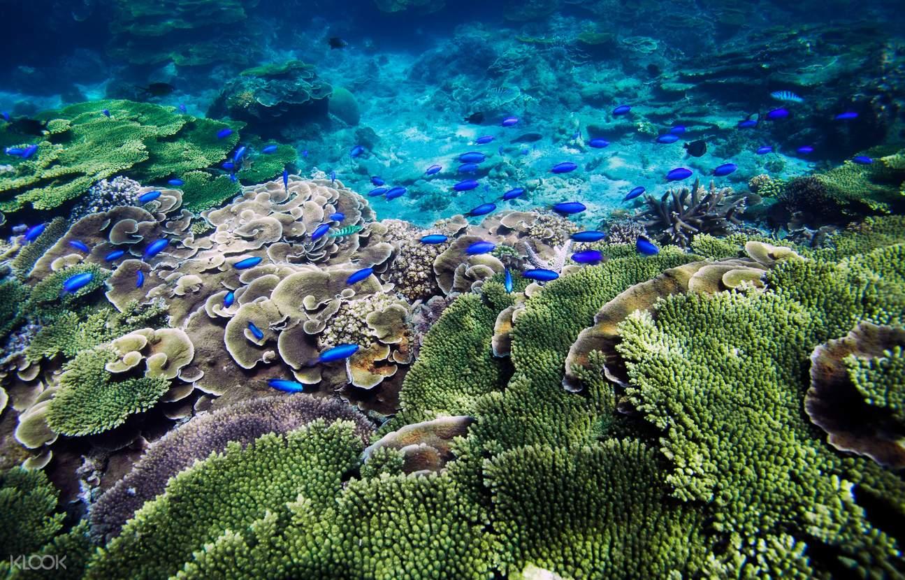 忘憂島珊瑚礁