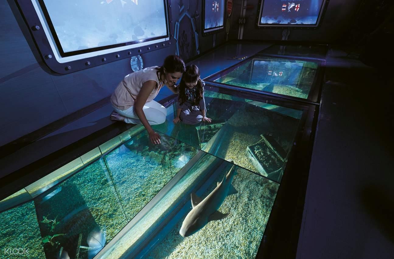 shark walk sea life bangkok ocean world