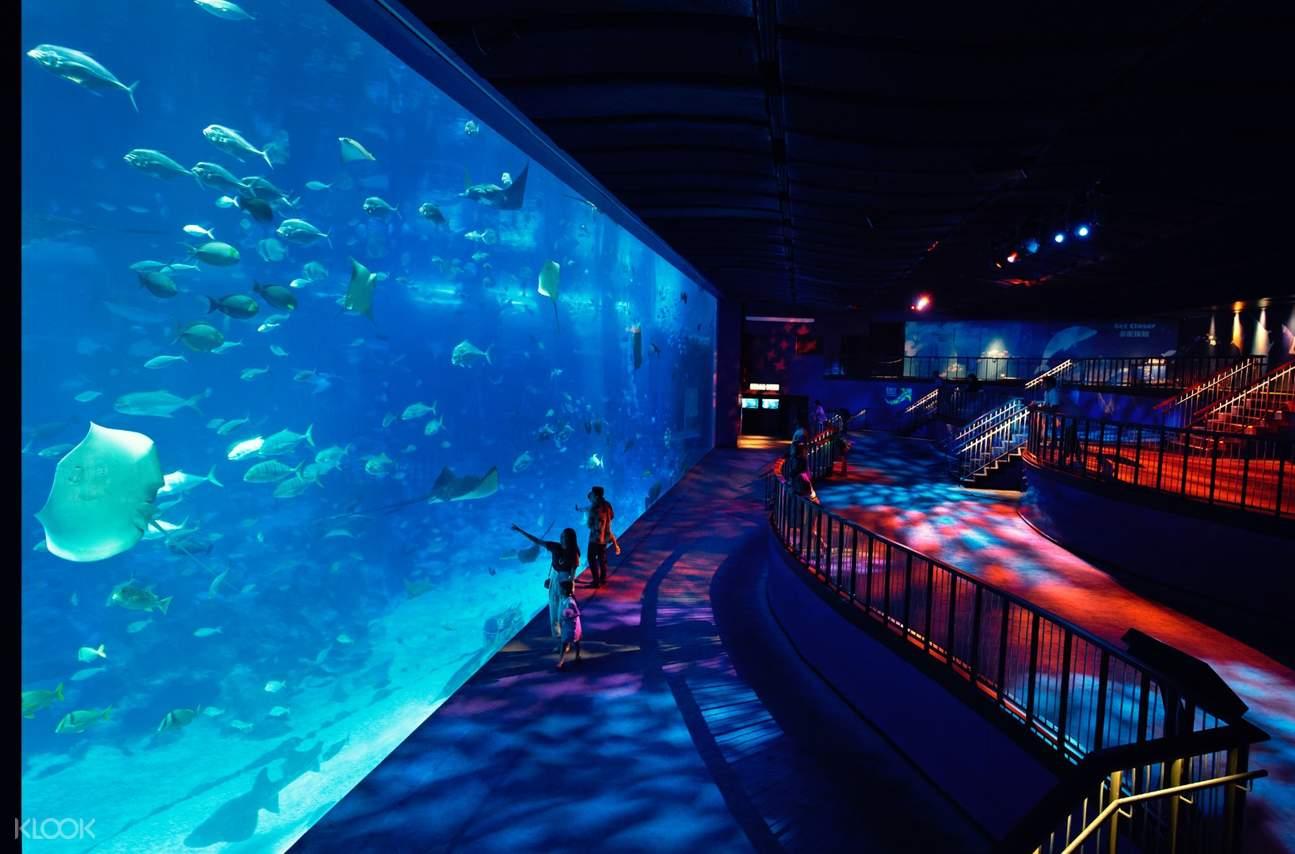 S.E.A.海洋館遊客觀賞海洋生物