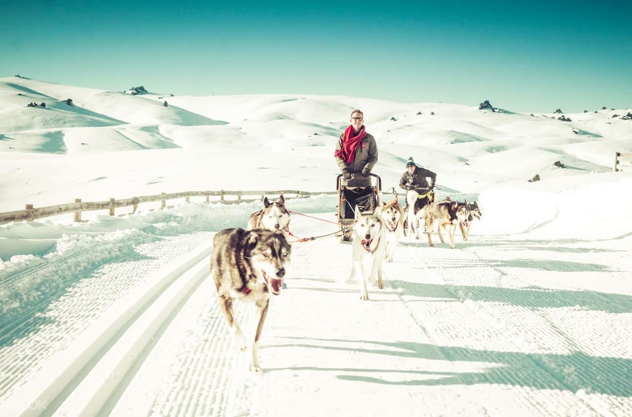 dog sledding through the snow
