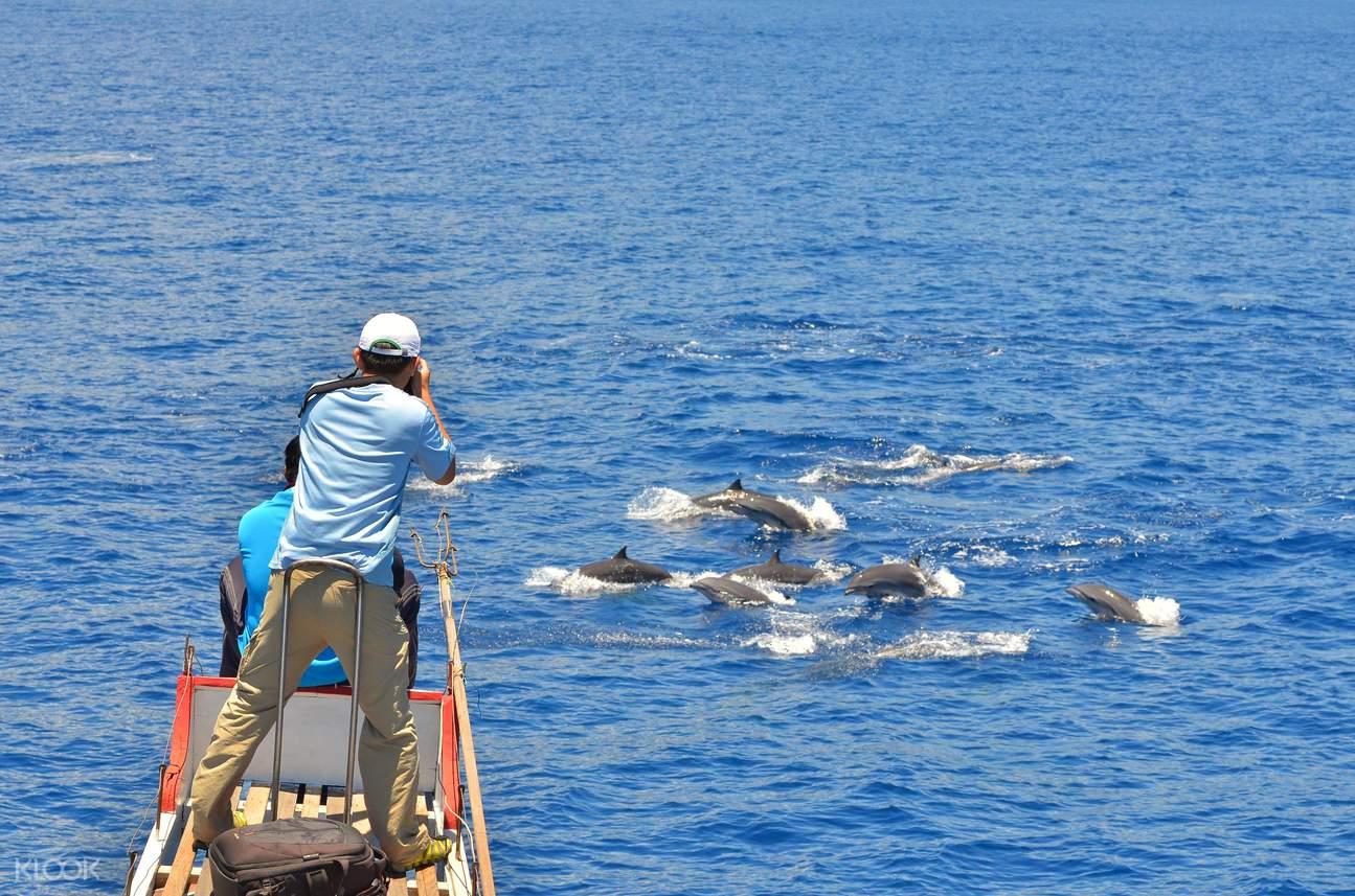 台東賞鯨體驗