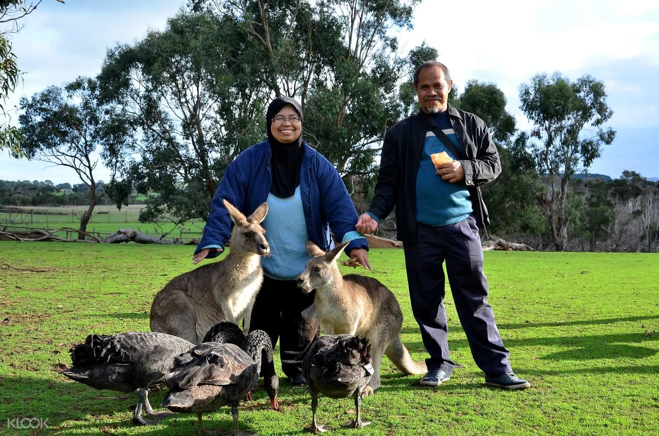 australia zoo tour from gold coast