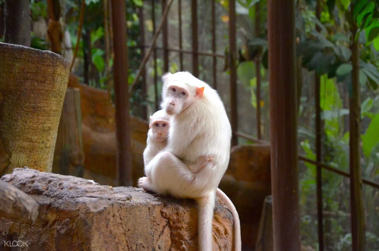 kl tower mini zoo tickets