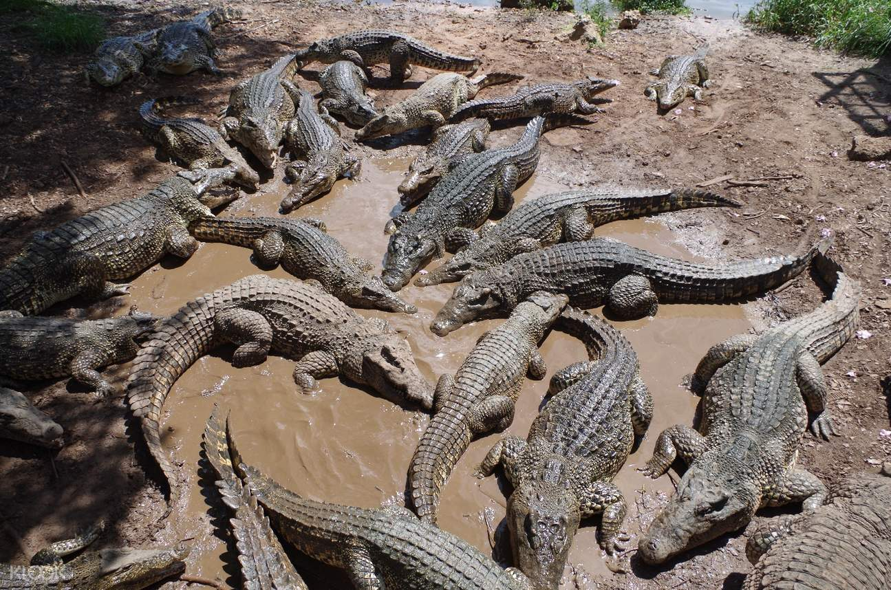 Crocodile Farms at Nha Trang