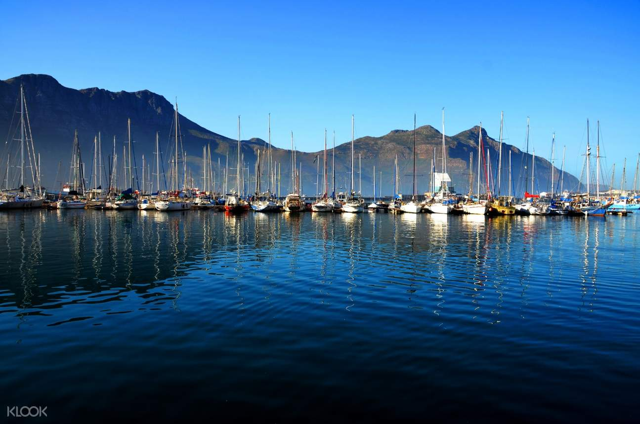 cape peninsula full day tour from cape town