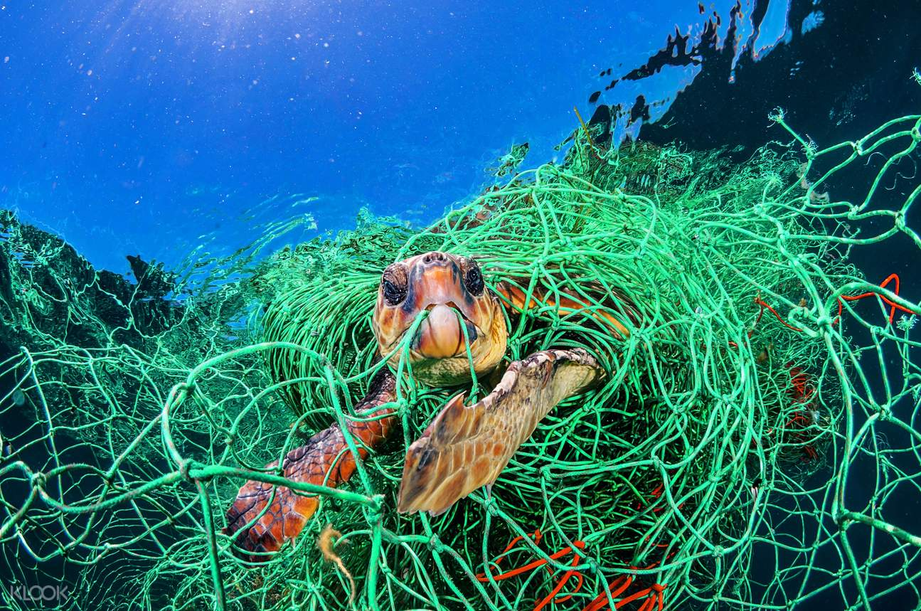 Learn about the global plastic pollution crisis through more than 70 powerful photographs and videos in an exhibition by National Geographic. (photo courtesy of Marina Bay Sands ArtScience Museum)