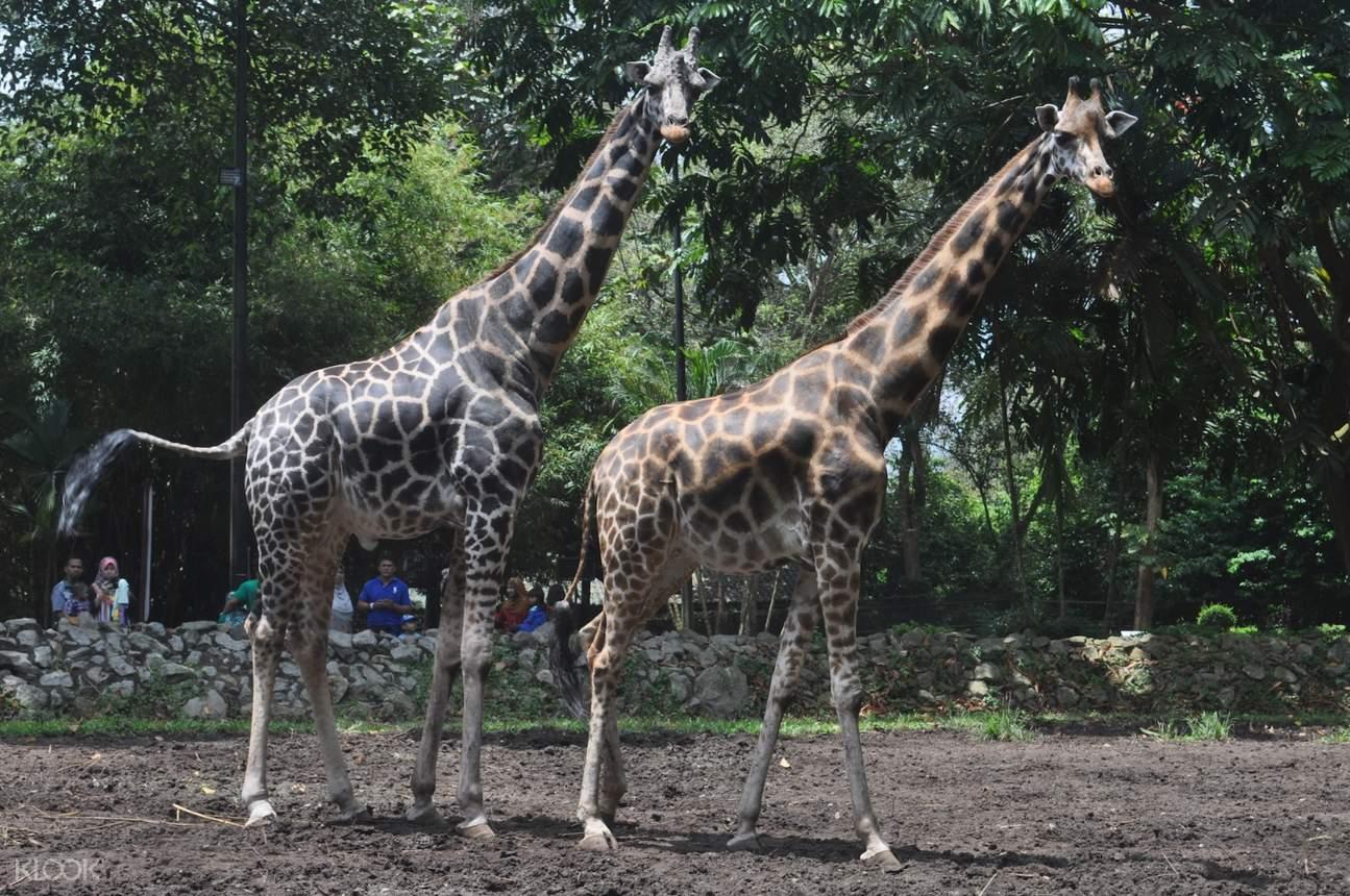 Melaka Zoo Night Safari Admission Ticket in Melaka