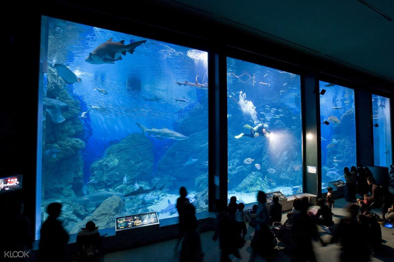 福岡海之中道海濱公園,福岡海洋世界水族館一日遊(普通話導遊/ 含午餐)
