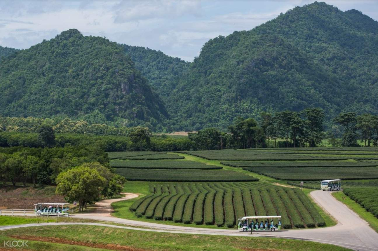 singha park chiang rai full day private tour