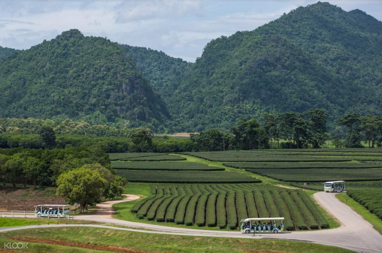 singha park chiang rai full day private tour