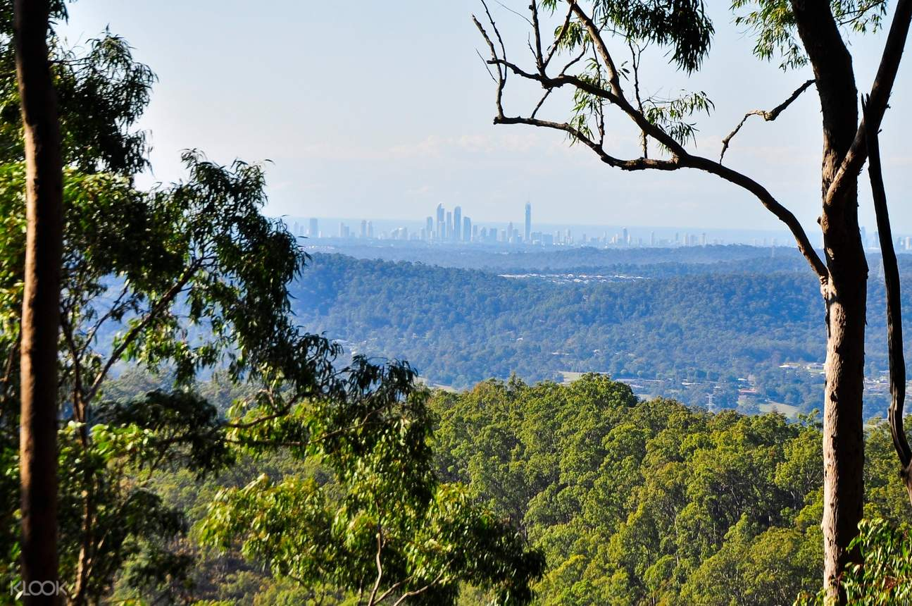 view of a city skyline from mount tamborine