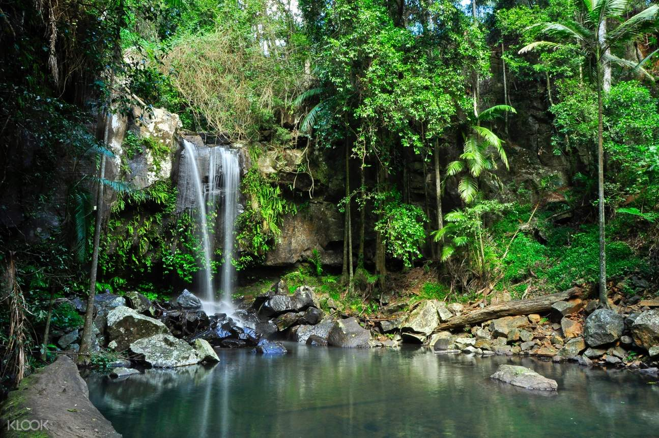 curtis falls surrounded by lush greeneries