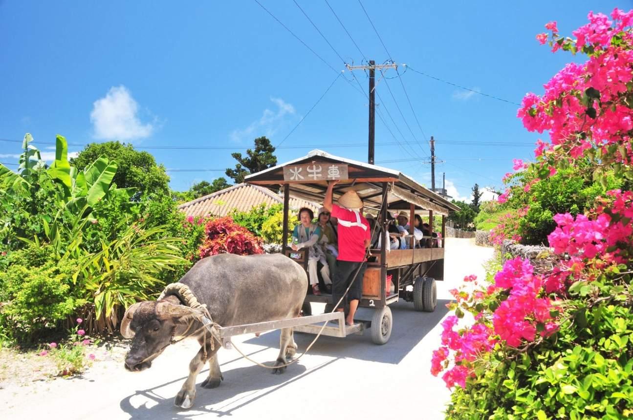 taketomi village water buffalo ride