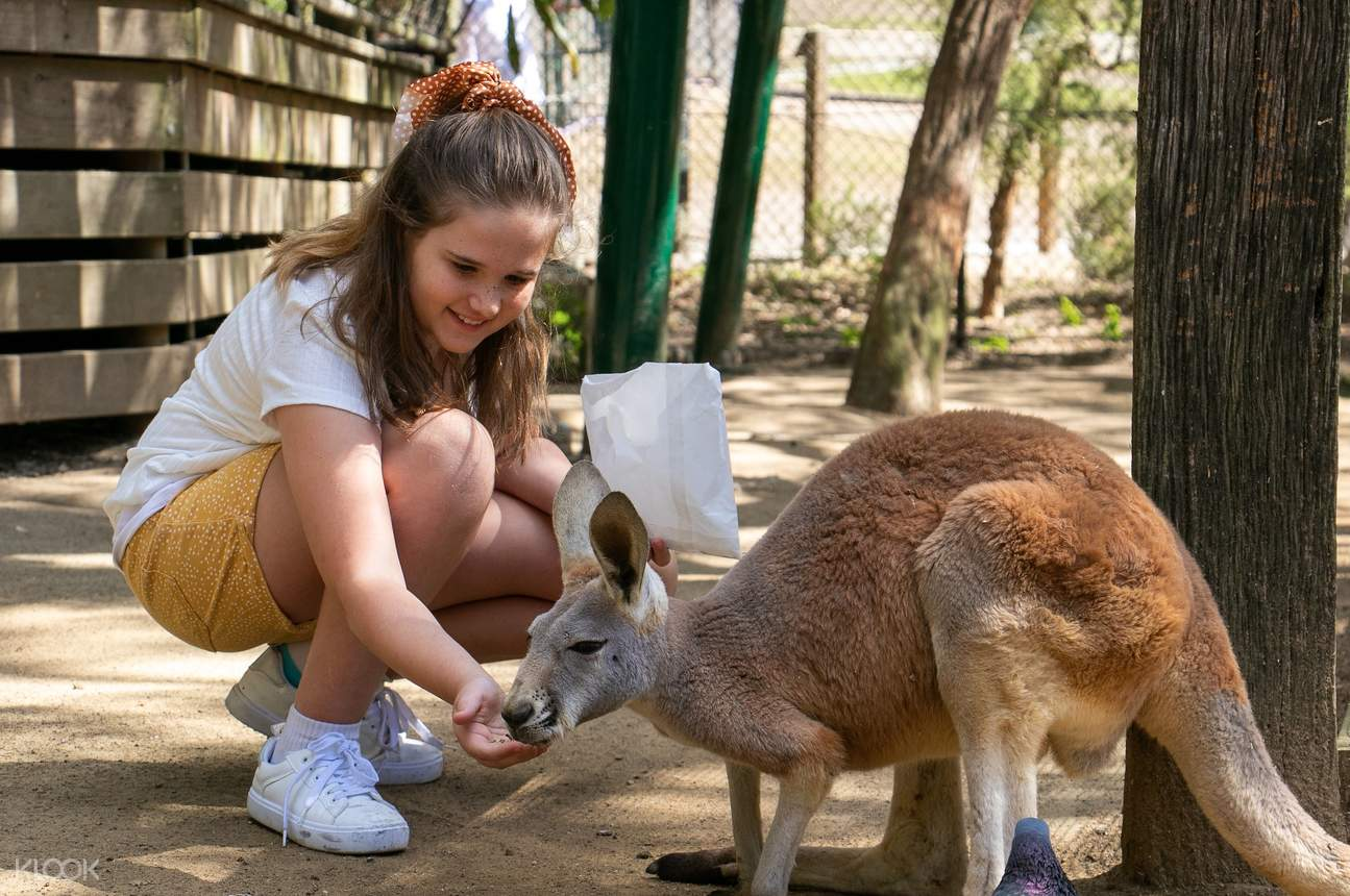Maximize your visit and bring your whole family at Currumbin Wildlife Sanctuary