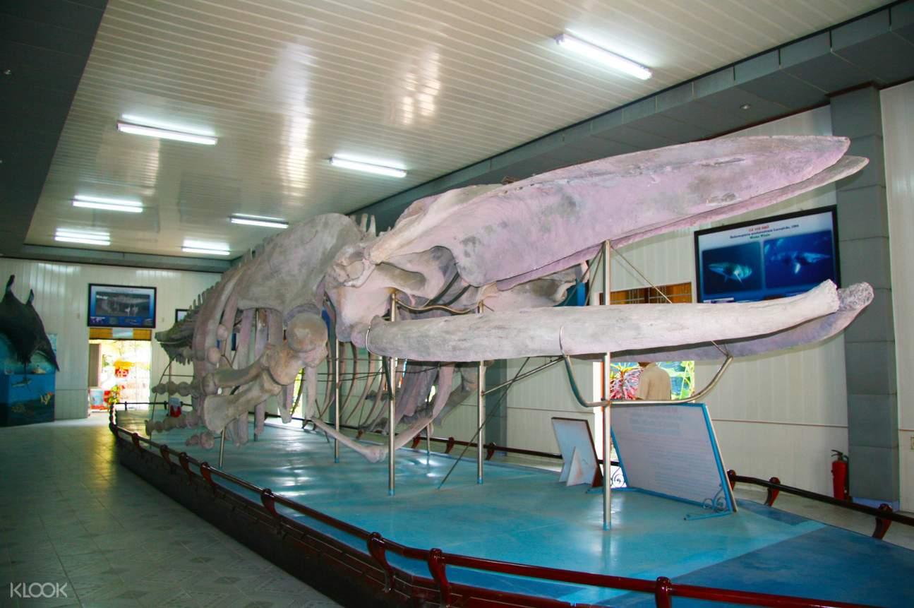 whale bones at The Institute of Oceanography