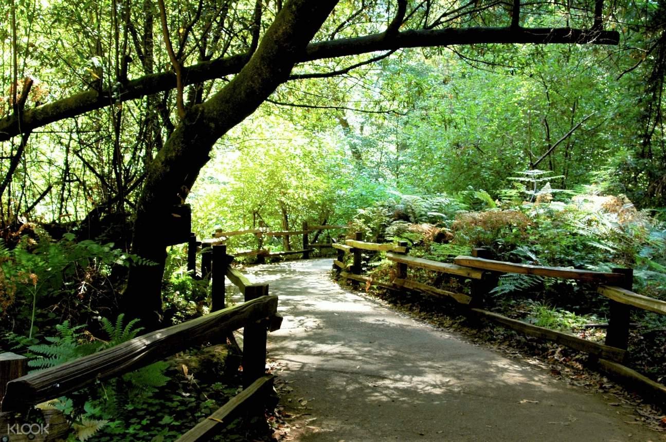 穆尔红木森林索诺玛