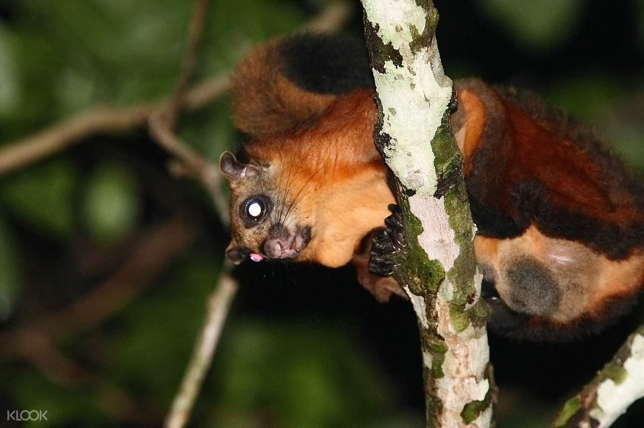 兰卡威夜行,兰卡威丛林夜行,兰卡威日落,兰卡威雨林,兰卡威雨林夜行