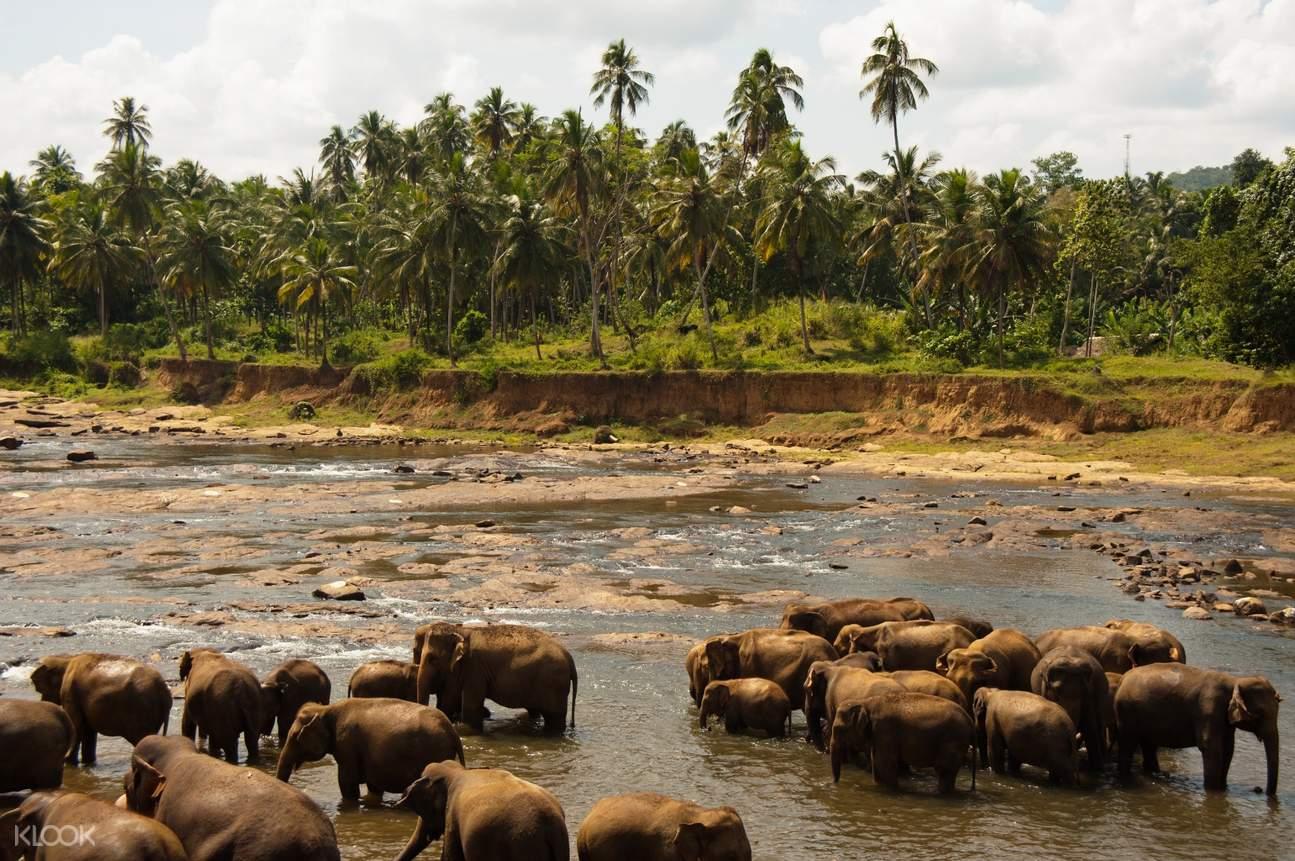 斯里兰卡 乌达瓦拉维国家公园狩猎之旅 Udawalawe