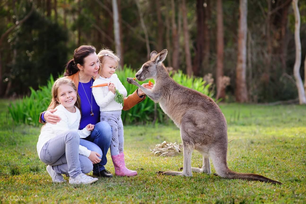 澳大利亚动物园袋鼠