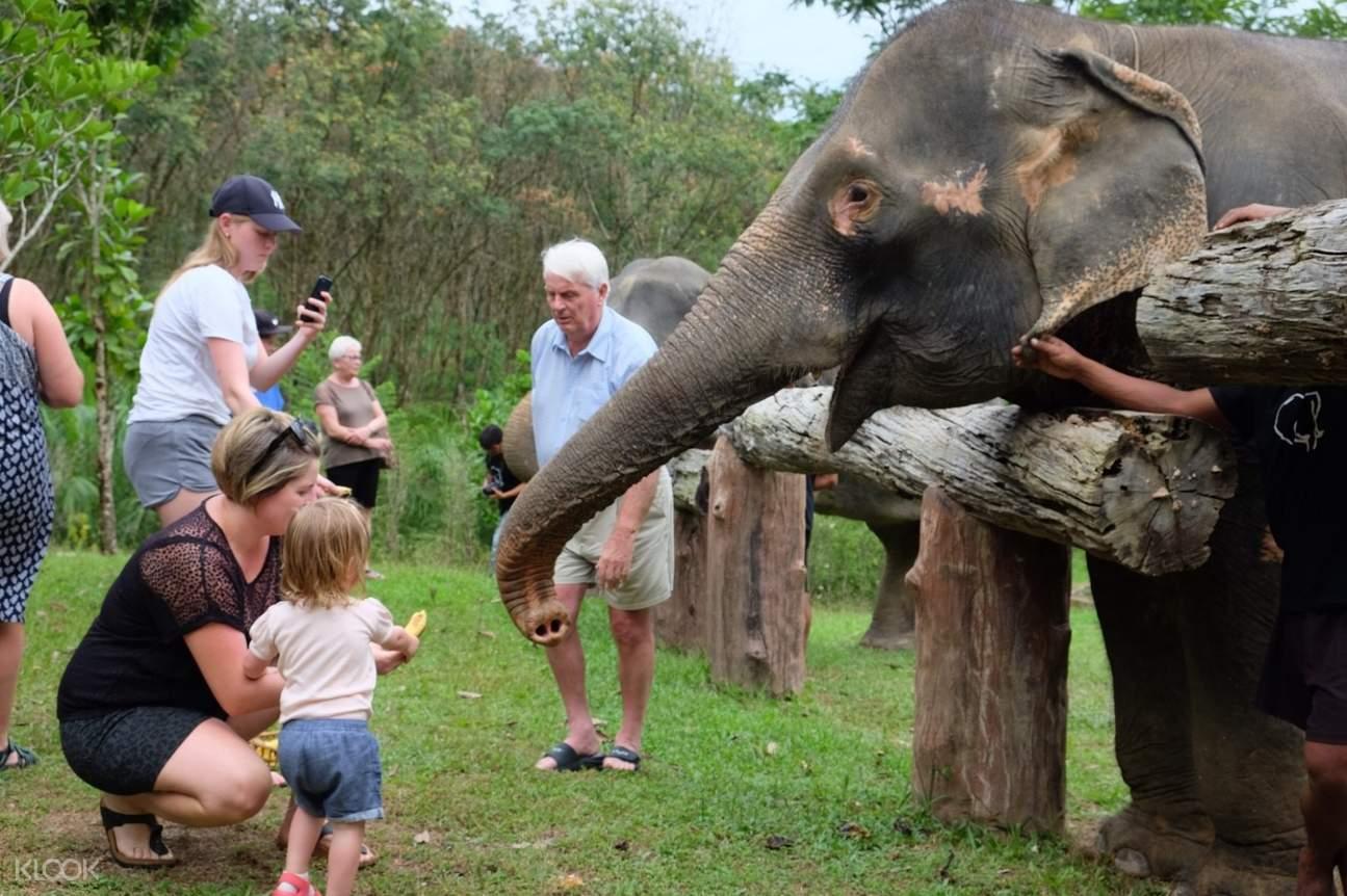 elephant experience in khao sok