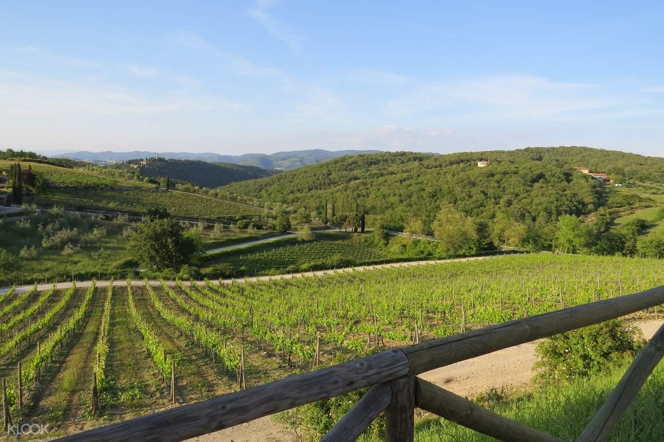 chainti vineyards