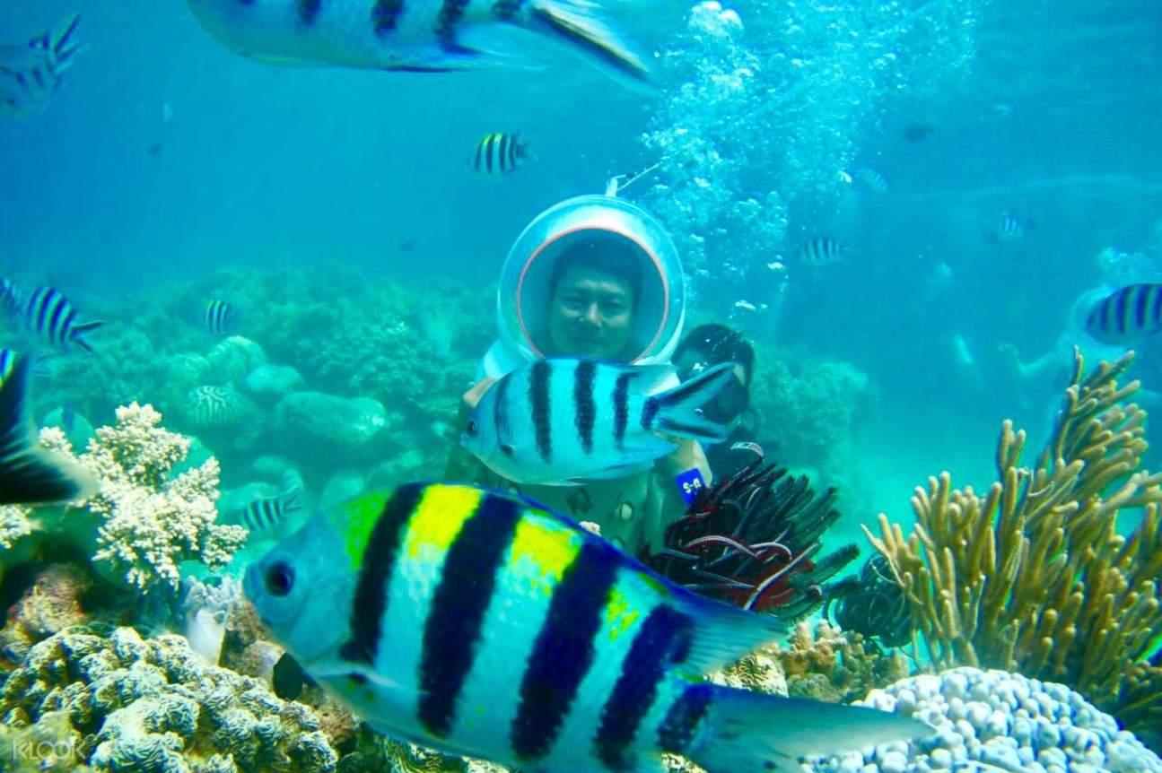 Khám phá hệ sinh thái biển khi tham gia chuyến đi lặn dưới đáy biển