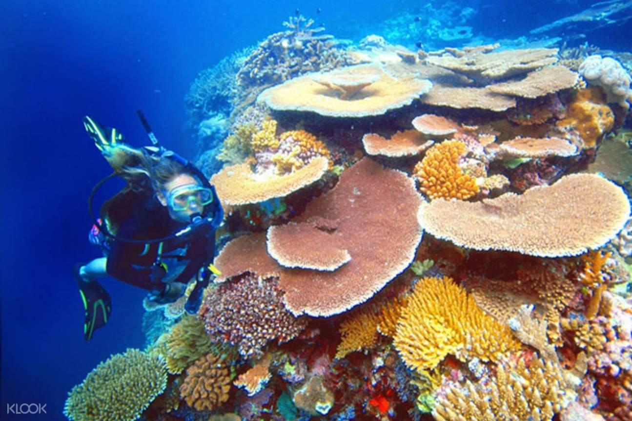 Woman snorkeling near coral reefs in Great Barrier Reef