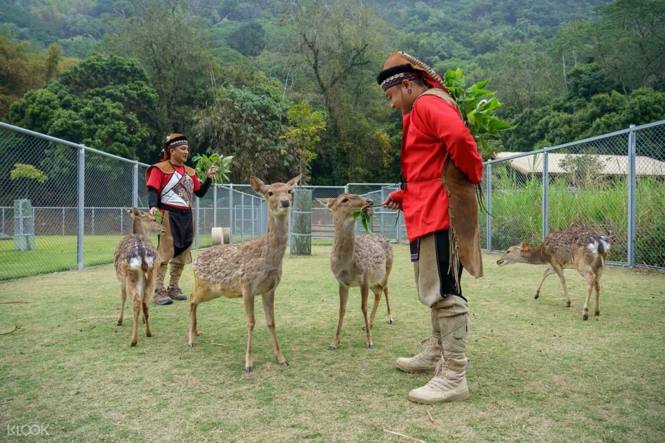 嘉義鄒族逐鹿部落餵鹿 & 射箭體驗