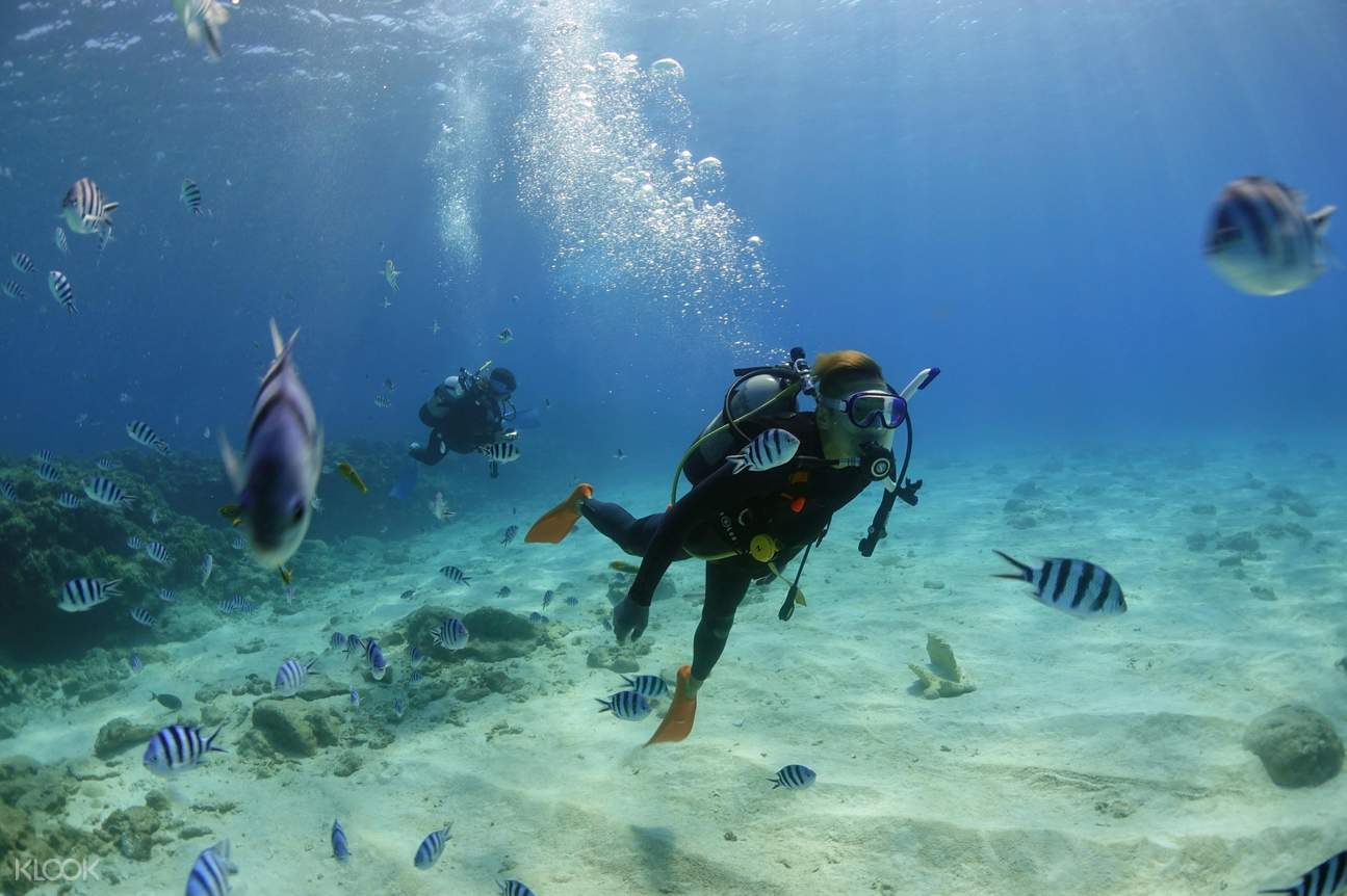 Diving with the sea creatures