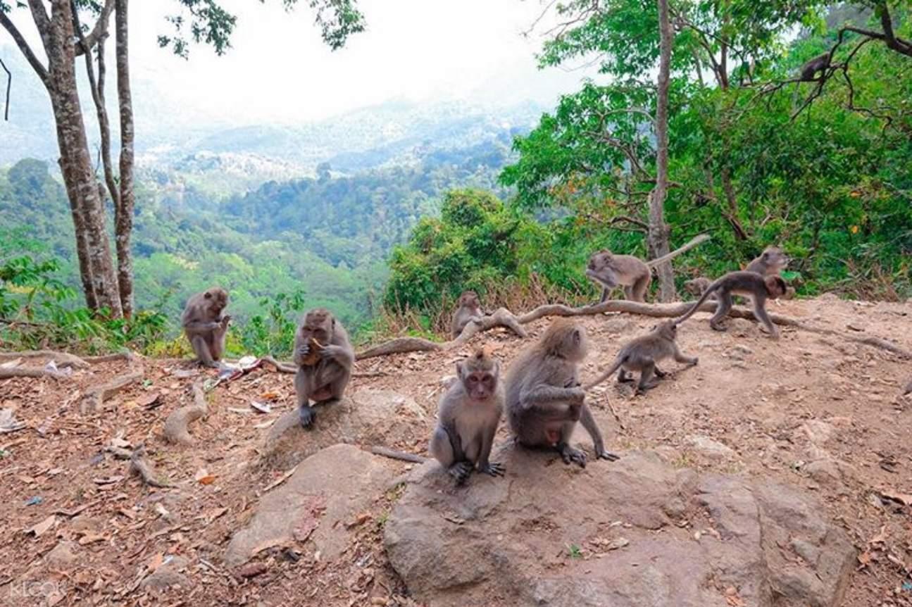 monkey forest in lombok island