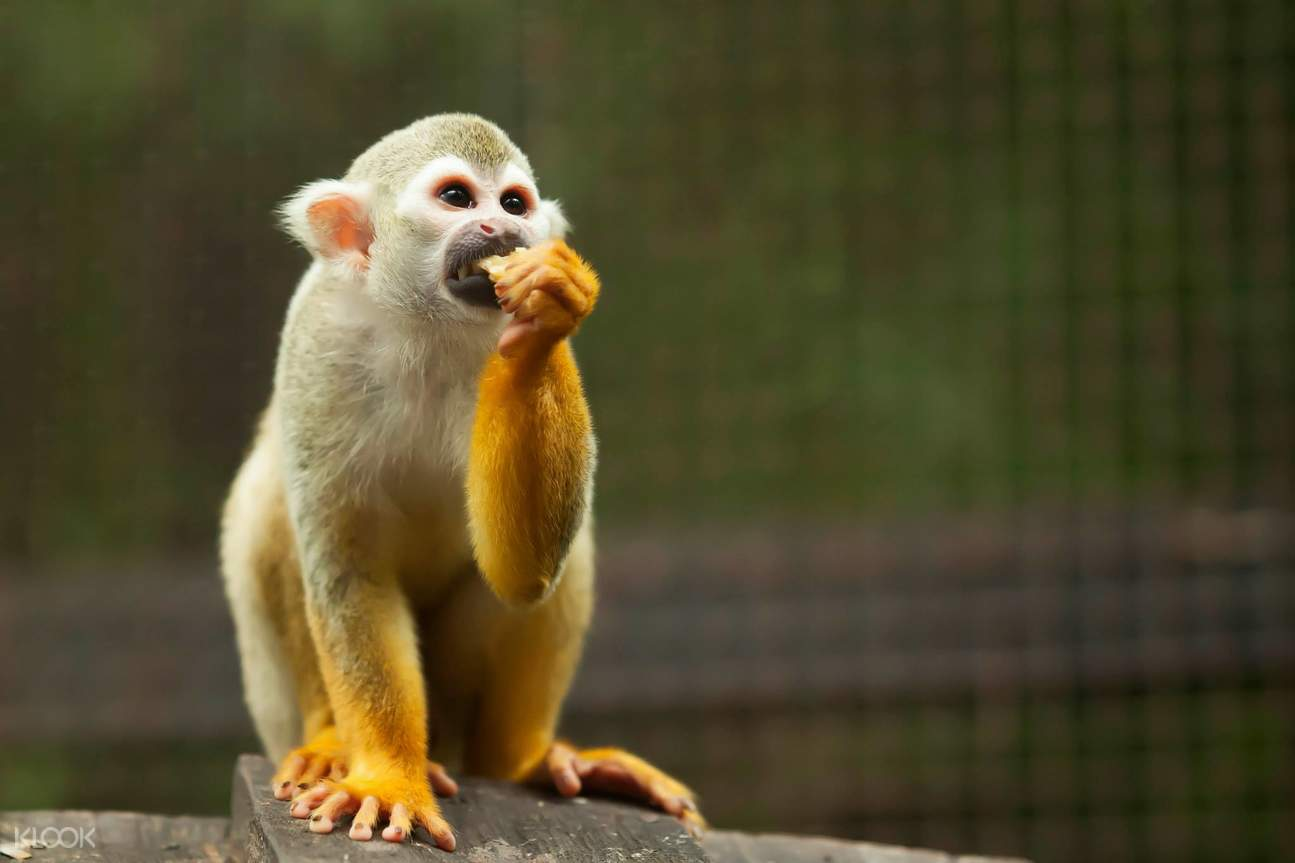 monkeys kl tower mini zoo