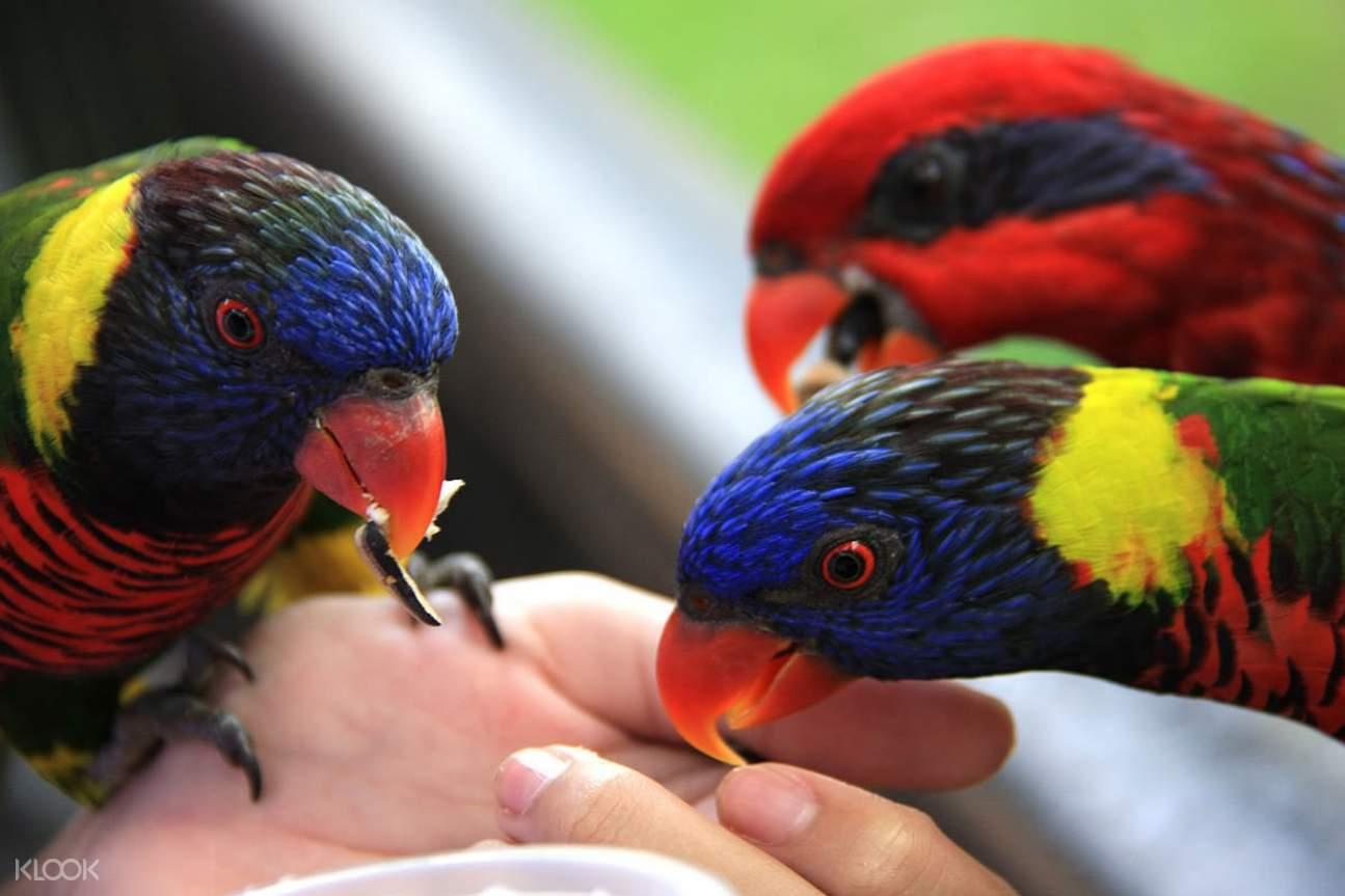 普吉島百鳥園門票