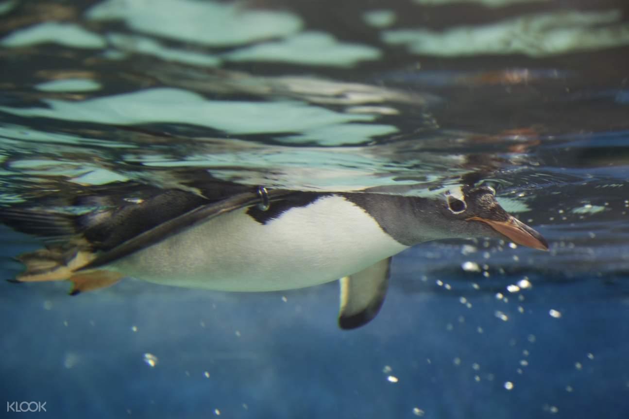 雪梨海洋生物水族館企鵝觀看體驗
