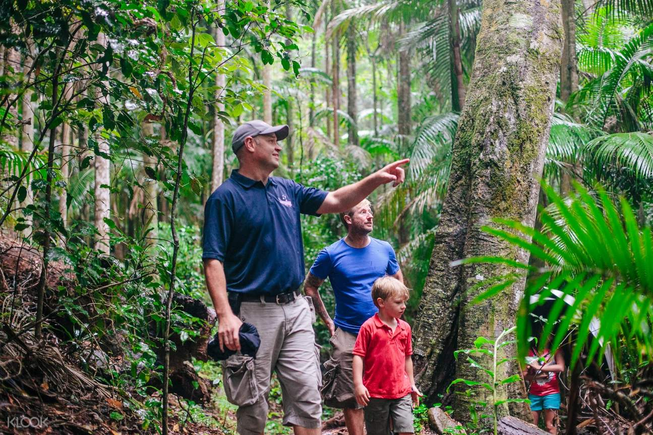 a group of tourists and a tour guide pointing at something while in the rainforest