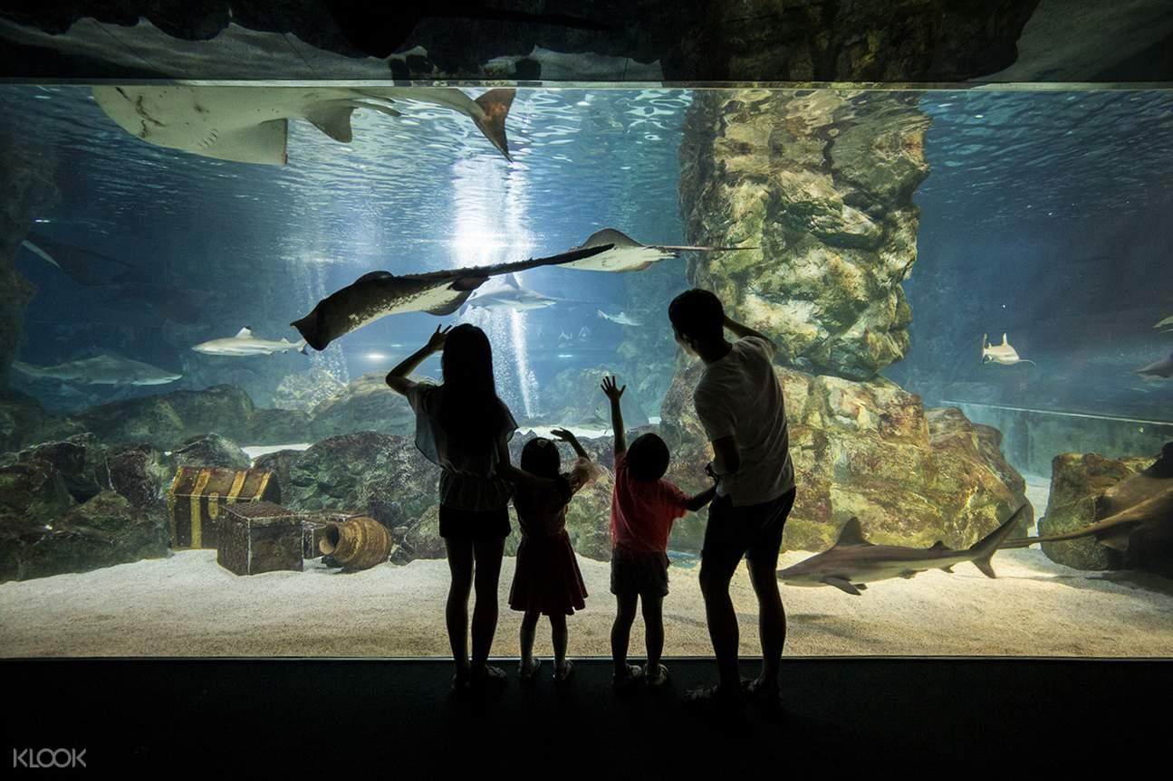 首爾COEX水族館一日門票