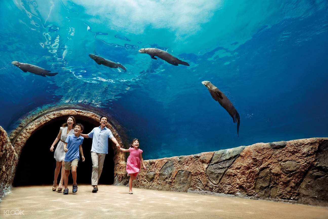 Make friends with the Giant River Otters