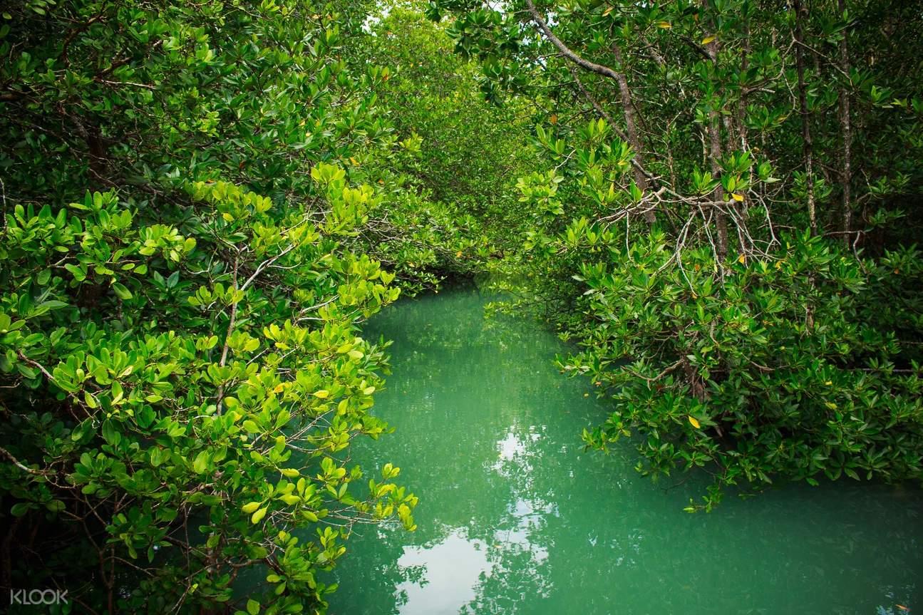 普吉島生態探險- 紅樹林