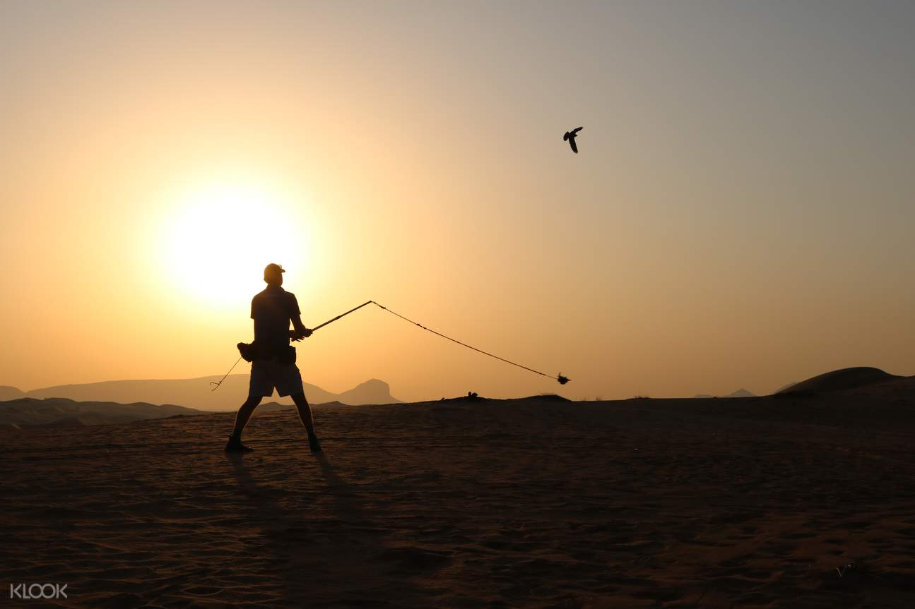 Arabian desert falcon show