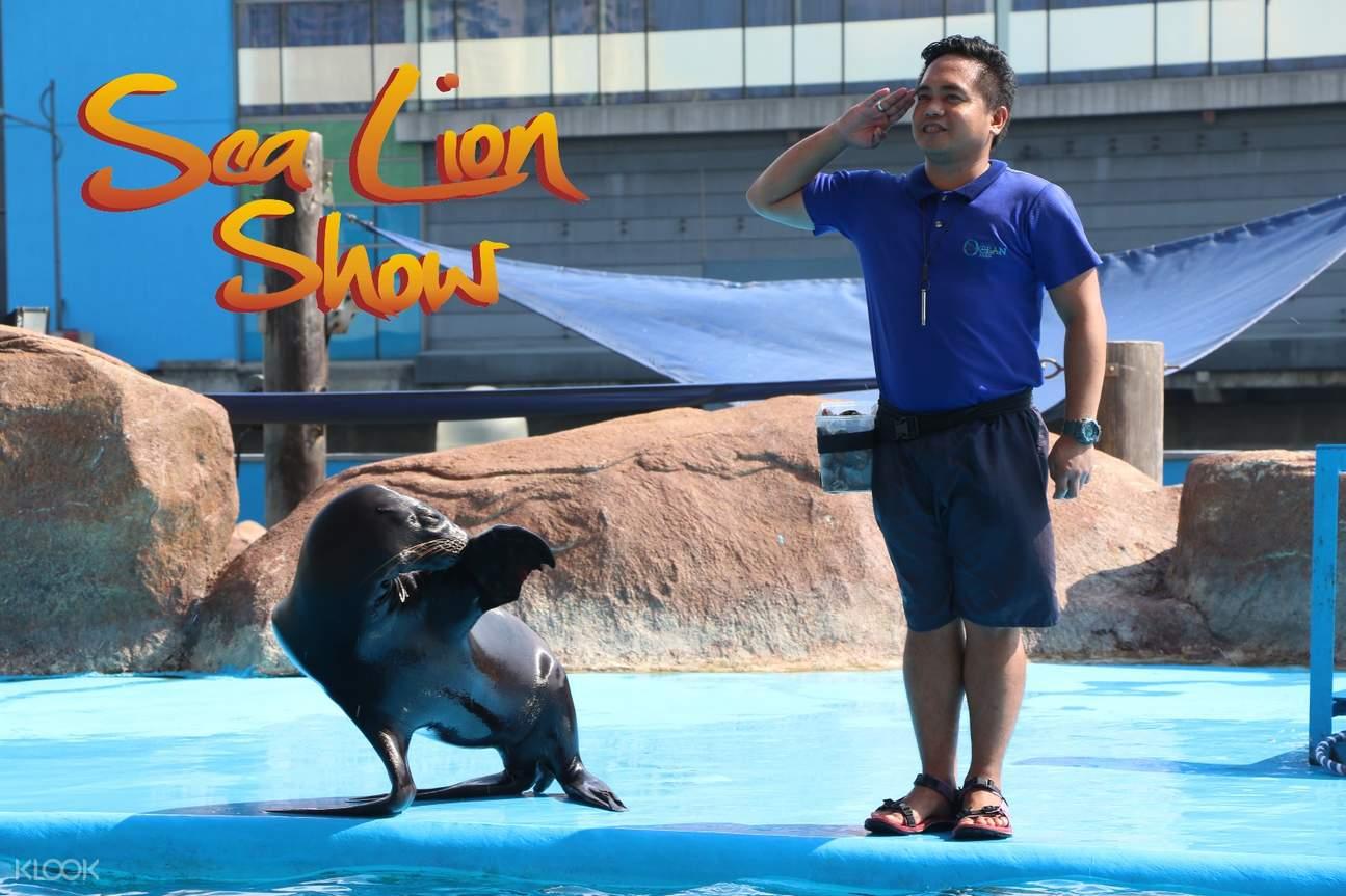 馬尼拉海洋公園 海獅表演