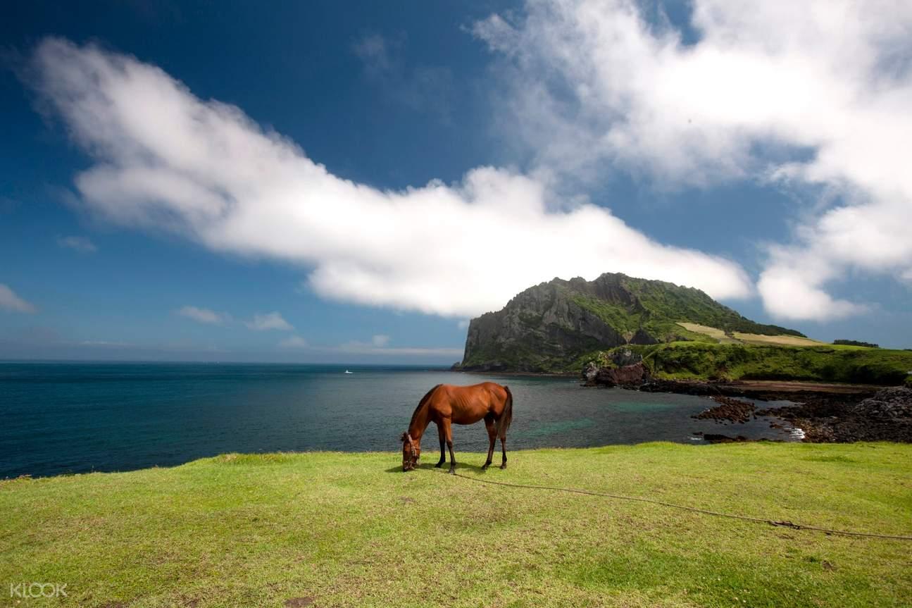 horse on jeju island