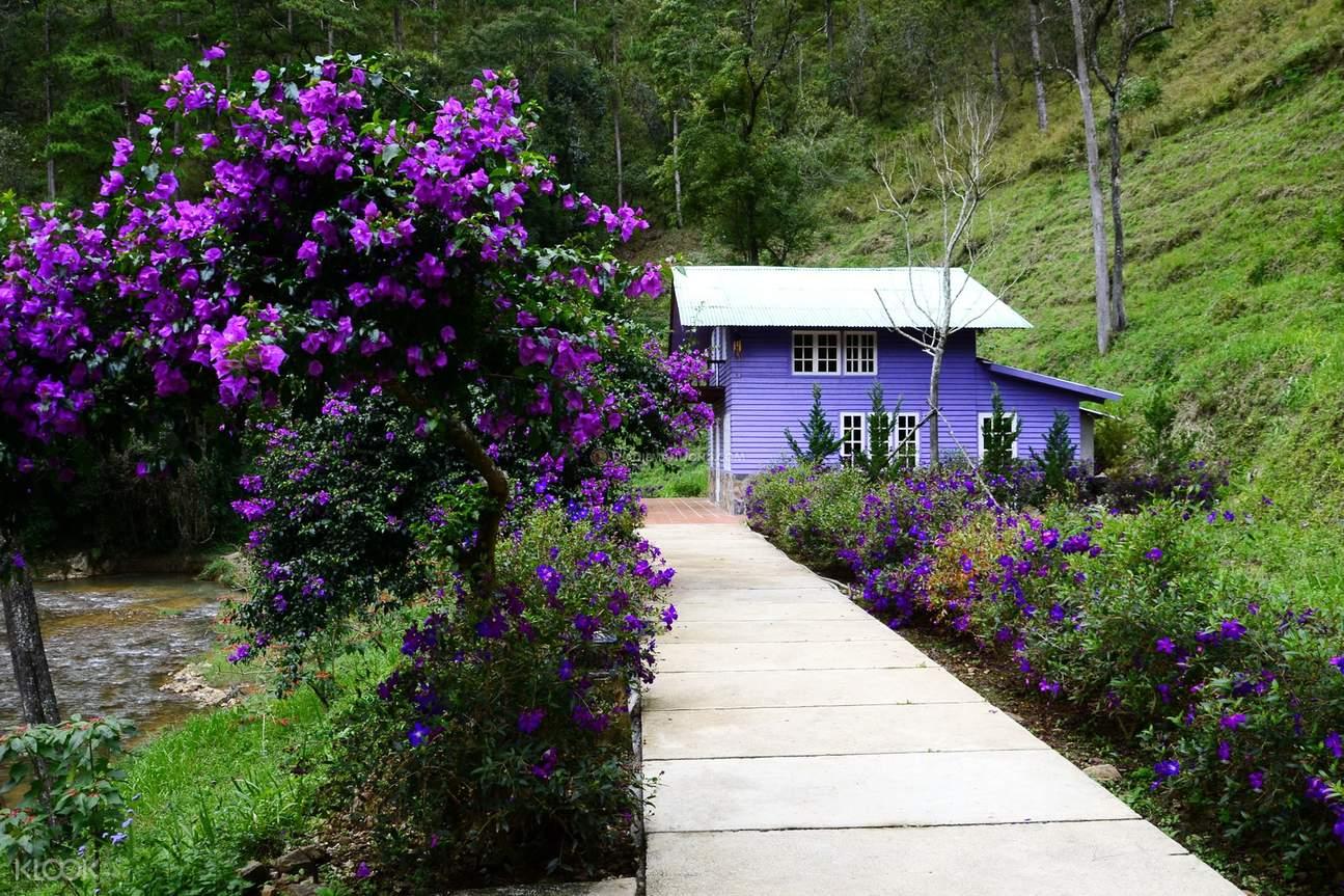大叻蜂猴村
