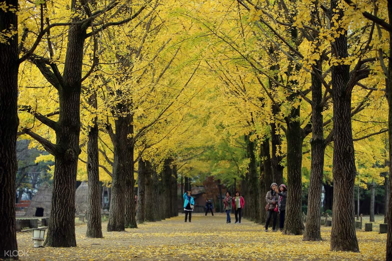 南怡岛 & 晨静树木园红叶一日游