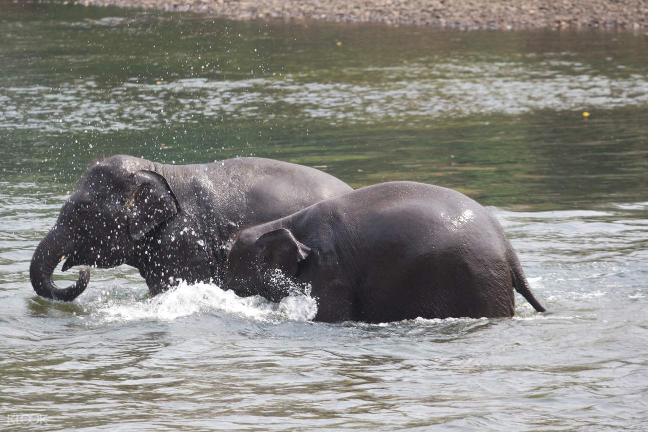 Elephants bathing at ElephantsWorld in Kanchanaburi