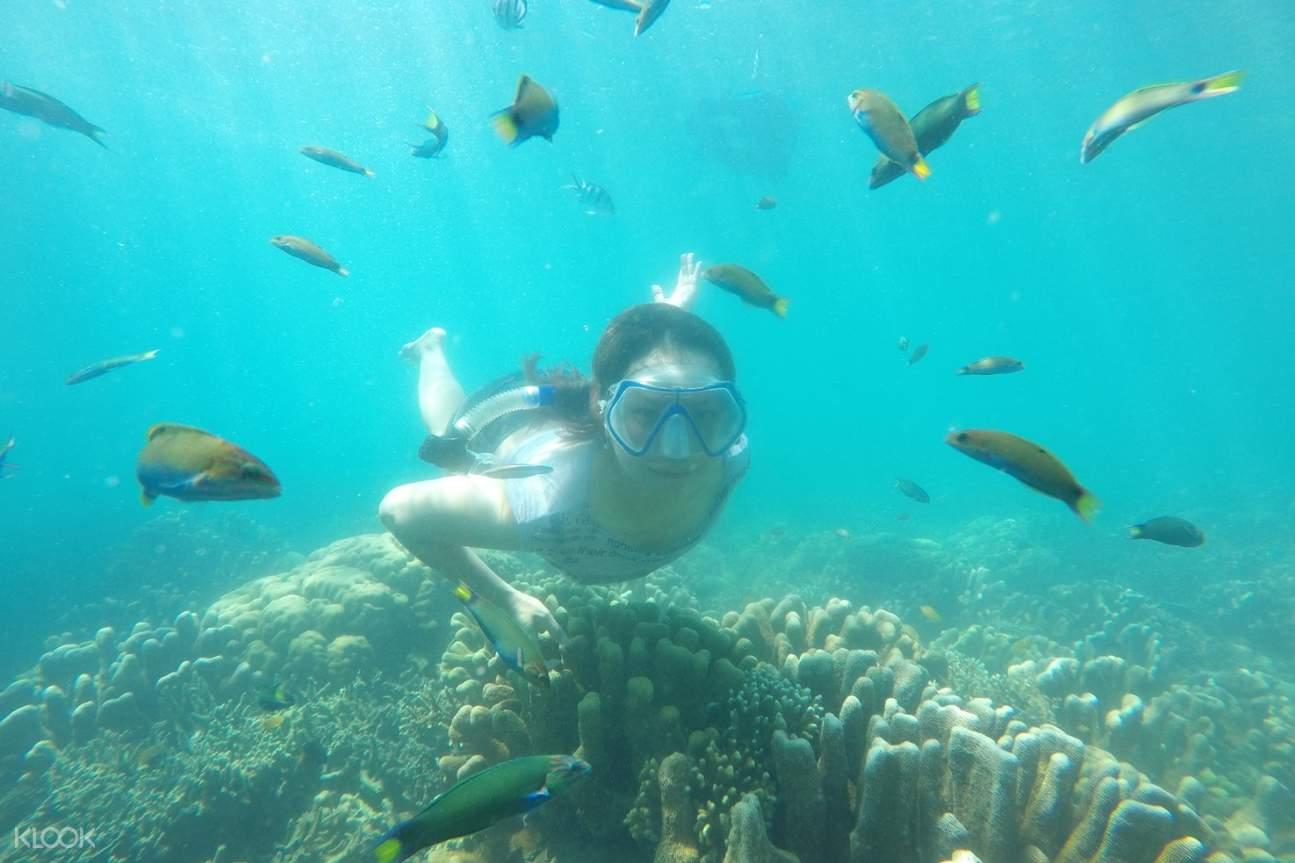 perempuan snorkeling di sekitar ikan