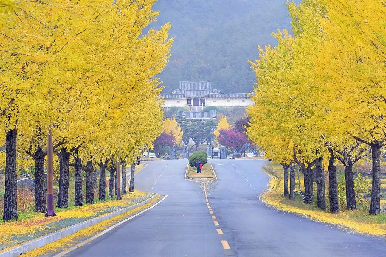 Tong-Iljeon Ginkgo Tree Street