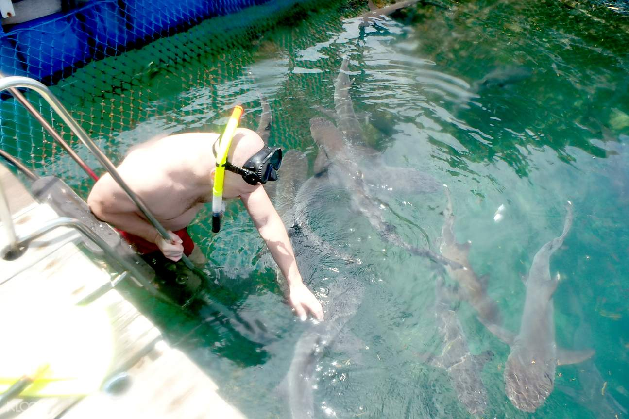 Swimming with Sharks in Bali