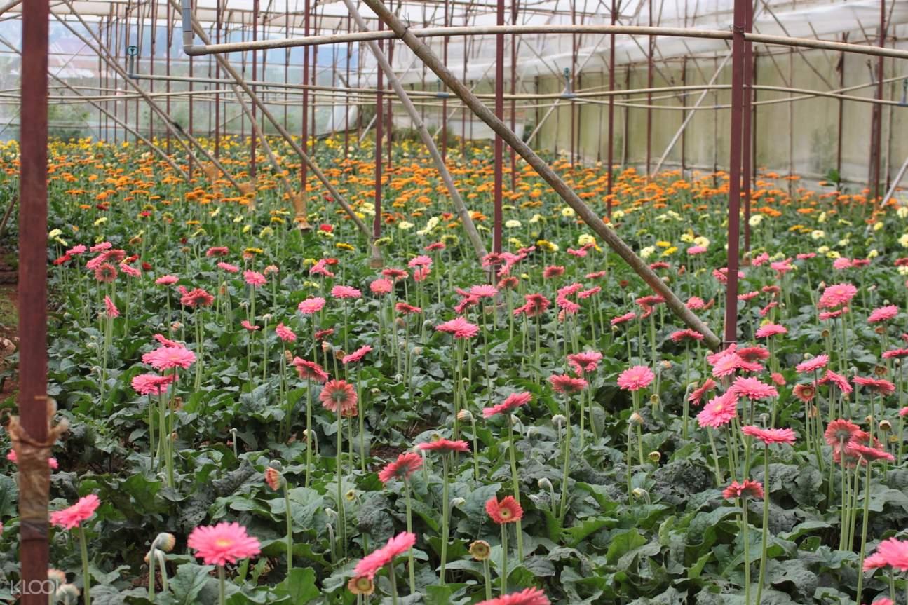 Van Thanh Flower Village