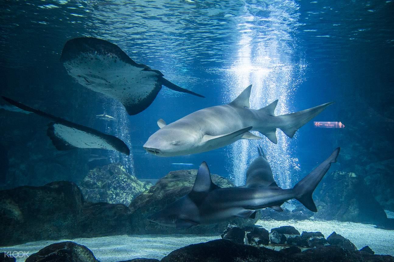 บัตรเข้าชมพิพิธภัณฑ์สัตว์น้ำ COEX (Coex Aquarium) โซล